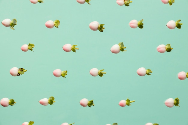 봄 꽃 봉오리의 상위 뷰