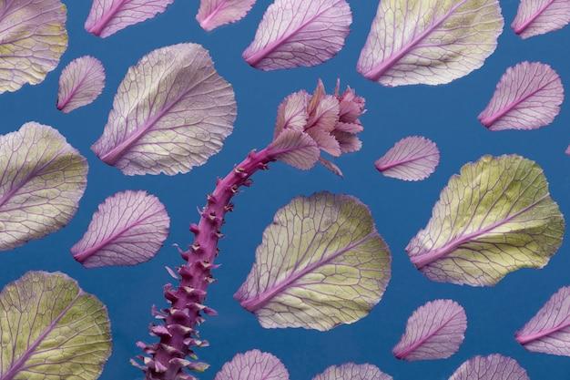 春の植物と葉の上面図