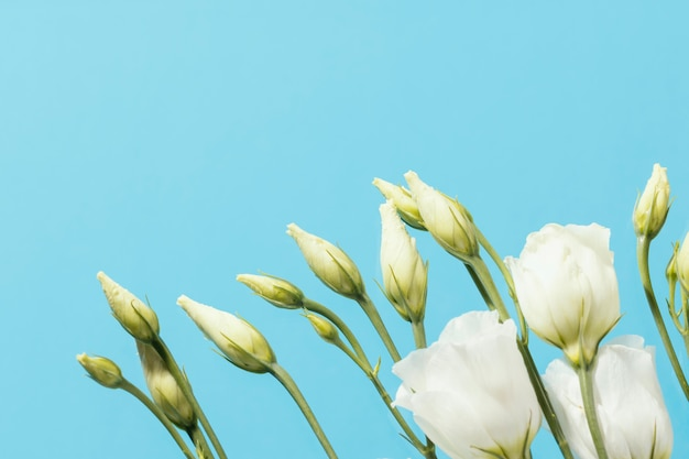 コピースペースのある春のバラの上面図