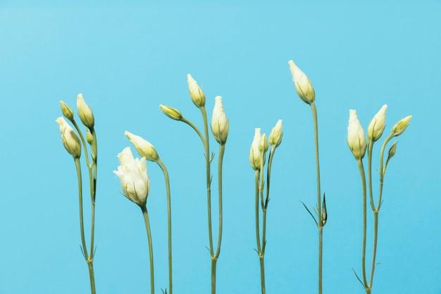 봄 장미의 상위 뷰
