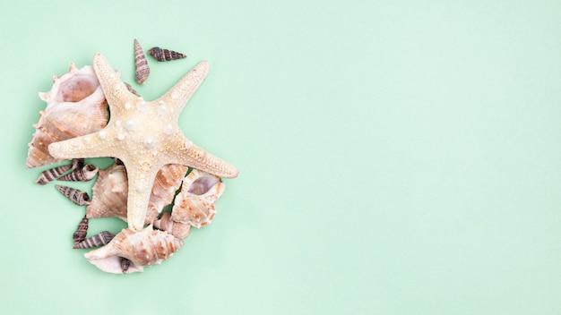 Вид сверху морских звезд и морских раковин с копией пространства