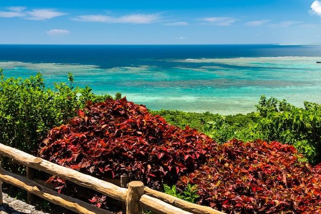 Вид сверху на потрясающее море в голубых и светло-зеленых тонах, полное коралловых рифов. красная и зеленая растительность на переднем плане.