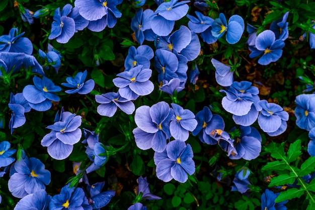 푸른 꽃 자연 배경의 상위 뷰