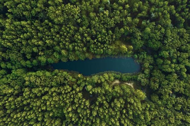 Вид сверху на лесное озеро в окружении зеленых деревьев. красивый пейзаж с высоты птичьего полета.