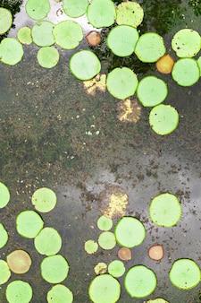 モーリシャス島のユリの池の平面図。モーリシャス島の楽園の植物園。