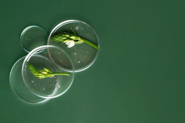 中に透明なゲルが入ったペトリ皿の上面図新鮮な緑の葉が入っています