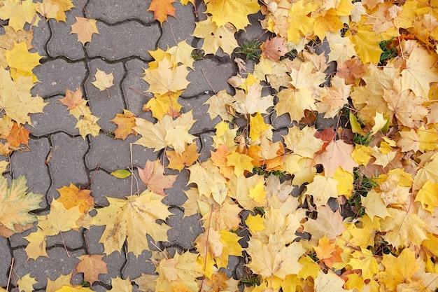 カラフルなカエデの葉が散らばっている道路の上面図
