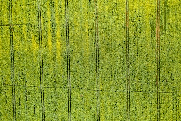 벨로루시에서 뿌려진 녹색의 상위 뷰 벨로루시에서 농업. 질감.