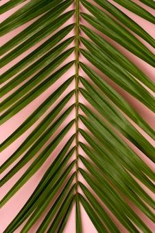 얇은 식물 잎의 평면도