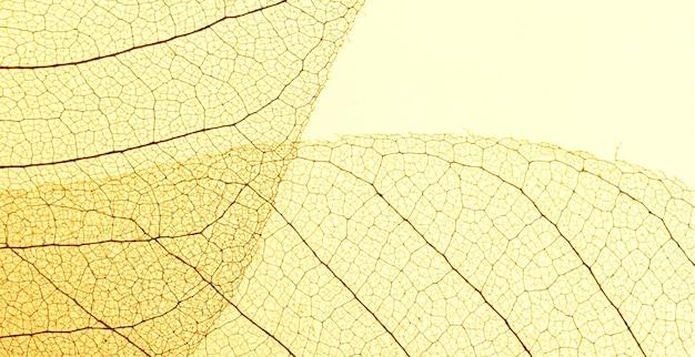 Вид сверху полупрозрачной текстуры листьев