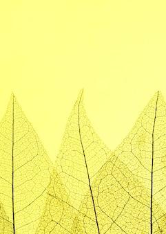 Вид сверху полупрозрачных листьев с копией пространства