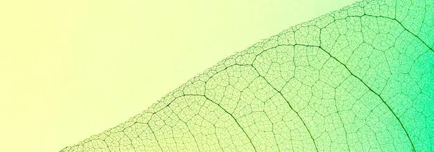 Вид сверху на прозрачный лист с оттенком нескольких цветов