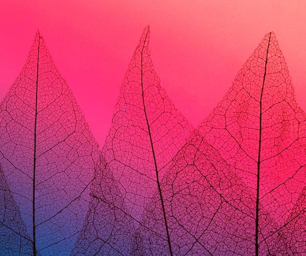 色の色相を持つ透明な葉のテクスチャーの平面図