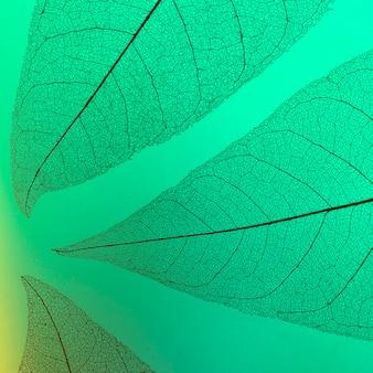 Вид сверху прозрачной текстуры листьев