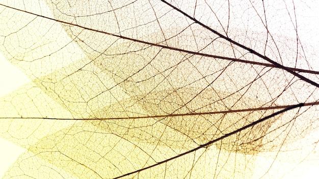 Вид сверху прозрачных листьев