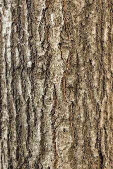 나무 껍질의 상위 뷰