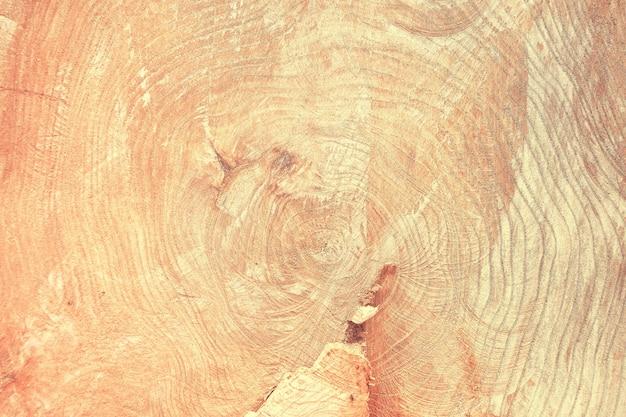 나무 그루터기의 상위 뷰