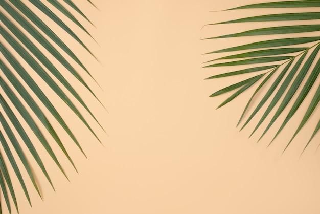 熱帯のヤシの葉の枝をコピースペースのある明るいオレンジ色の表面に分離した上面図。