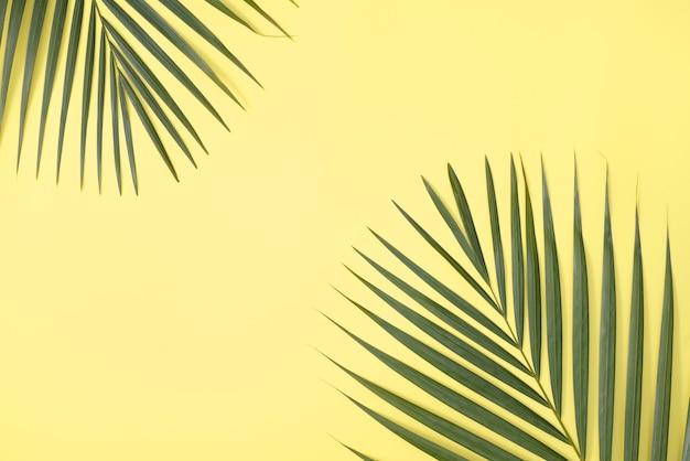 熱帯のヤシの葉の枝をコピースペースのある明るい黄色の表面に分離した上面図。