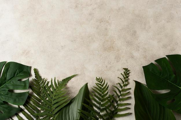 コピースペースと熱帯植物の葉の上面図