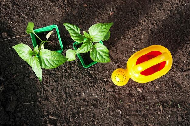 두 개의 화분에 심은 식물과 토양 바닥에 노란색 물을 수의 평면도.