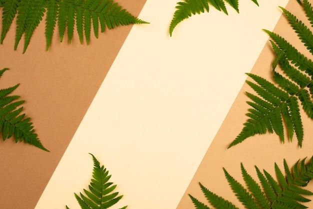 Вид сверху на разнообразие листьев папоротника с копией пространства