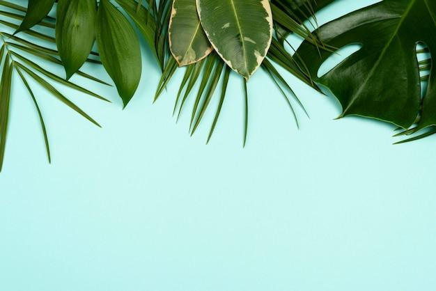 복사 공간이 다양한 잎의 상위 뷰