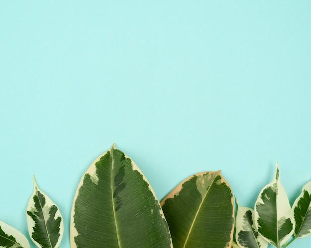 Вид сверху на разнообразие листьев растений с копией пространства