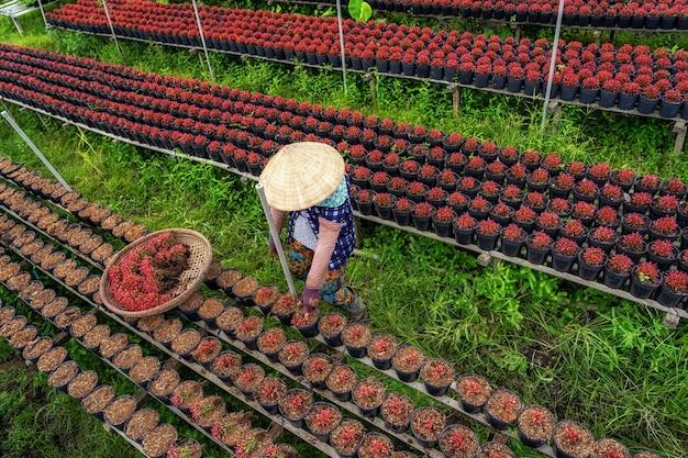 베트남 사덱 동탑(sadec dong thap) 지방의 붉은 꽃 정원에서 일하는 베트남 농부의 최고 전망