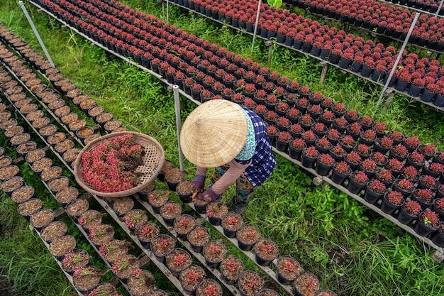 사덱 동탑 지방의 붉은 꽃 정원에서 일하는 베트남 농부의 최고 전망