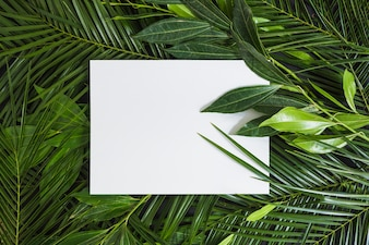 Top view of white blank page on green leaves