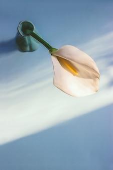 日光の下で緑のセラミック花瓶に入れられた白いオランダカイウユリの花の上面図