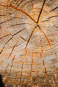 Top view of old stump used as a resting seat. wood texture
