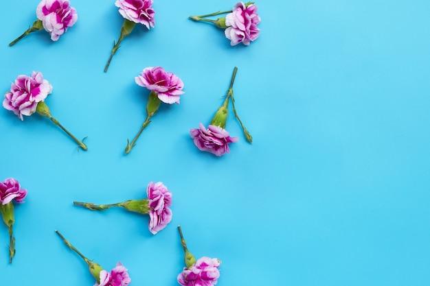 Вид сверху на цветок гвоздики изолированные
