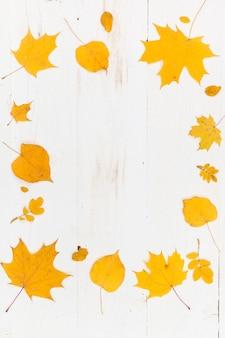 Вид сверху на раму из желтых осенних листьев (клен и известь) на белом деревянном фоне.