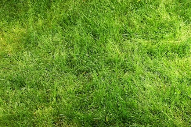 녹색 신선한 천연 잔디에 상위 뷰