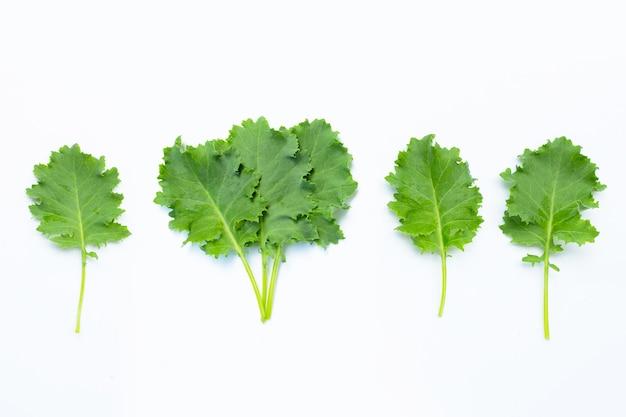 Вид сверху на изолированные листья капусты
