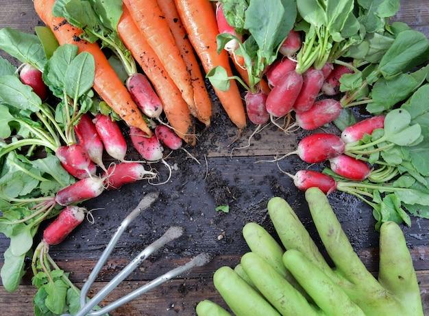Вид сверху на органическую грязную морковь и редис, недавно собранную в саду и положенную на доску с небольшими граблями и перчатками