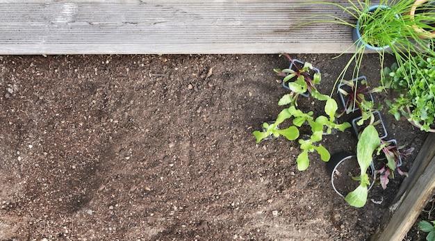 Вид сверху на рассаду овощей и ароматических растений с почвенным фоном