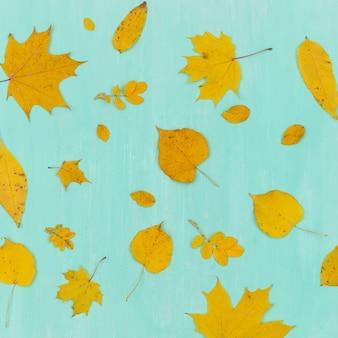 ターコイズブルーの木製の背景に黄色の秋のカエデとライムの葉の上面図。