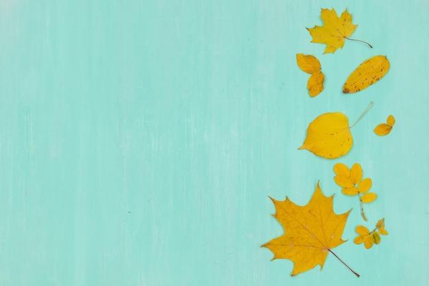 ターコイズブルーの木の背景に黄色の秋のカエデの葉の上面図。