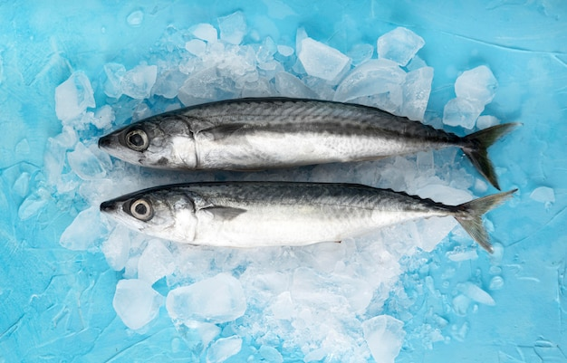 Top view of pair of fish with ice