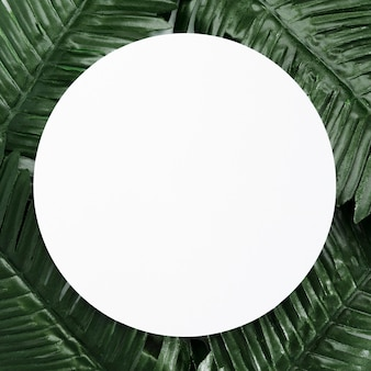 Top view palm leaves with copy space