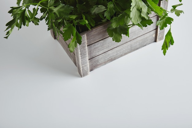Top view part wooden box with fresh green parsley and cilantro isolated on white table