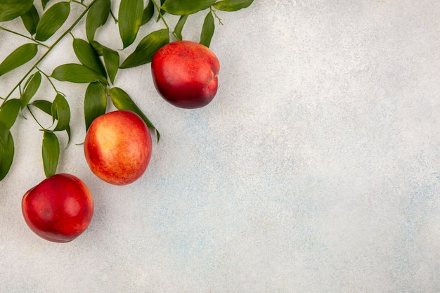 Top view of peaches and leaves on left side and white background with copy space