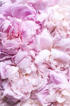 Vista dall'alto di fiori e petali di peonia