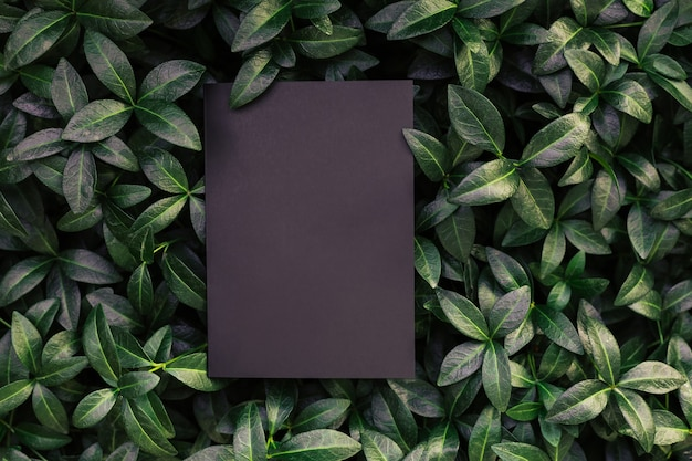 Top view of periwinkle leaf frame and copy space on black background green leaves with paper card na...