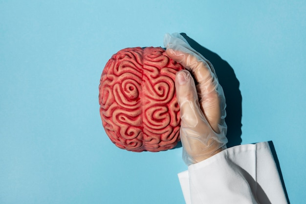 Top view person holding a brain