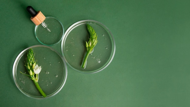 Top view of the petri dish with green plants in it and pipette from dropper