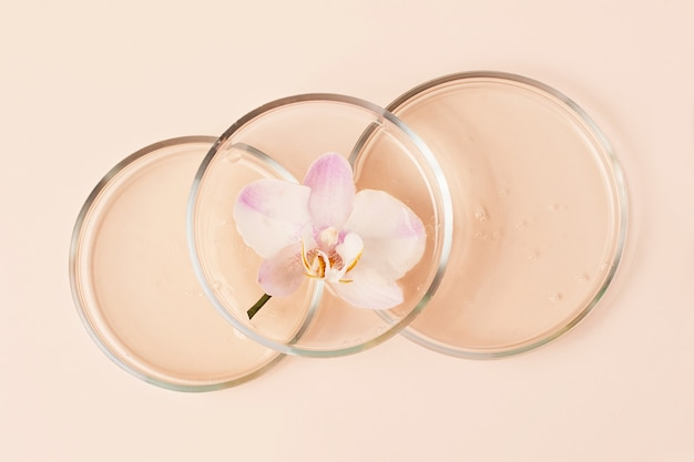 Top view of the petri dishes with transparent gel inside.fresh orchid in it.concept of the research and preparing cosmetic.pastel beige background.